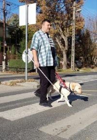 Kép: Egy férfi vakvezetőkutyájával és egy fehérbottal, épp átsétál egy gyalogosátkelőn.