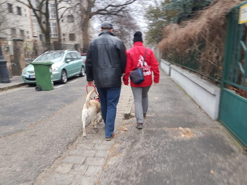 kép: Egy kiképző és a egy látássérült személy vakvezető kutyájával éppen azt gyakorolják, hogy tudnak gyorsan reagálni egy útesten lévő káttyúra!