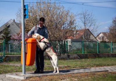 Panni nevű vakvezetőkutya éppen két első mancsával egy buszmegállót jelezz a kiképzőjének.