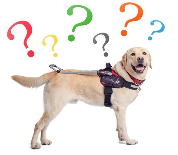 kép: vakvezetőkutya különböző méretű és színű kérdőjelekkel a feje fölött