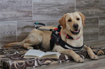 mvgyosz_vakvezetőkutya fekszik egy könyv előtt