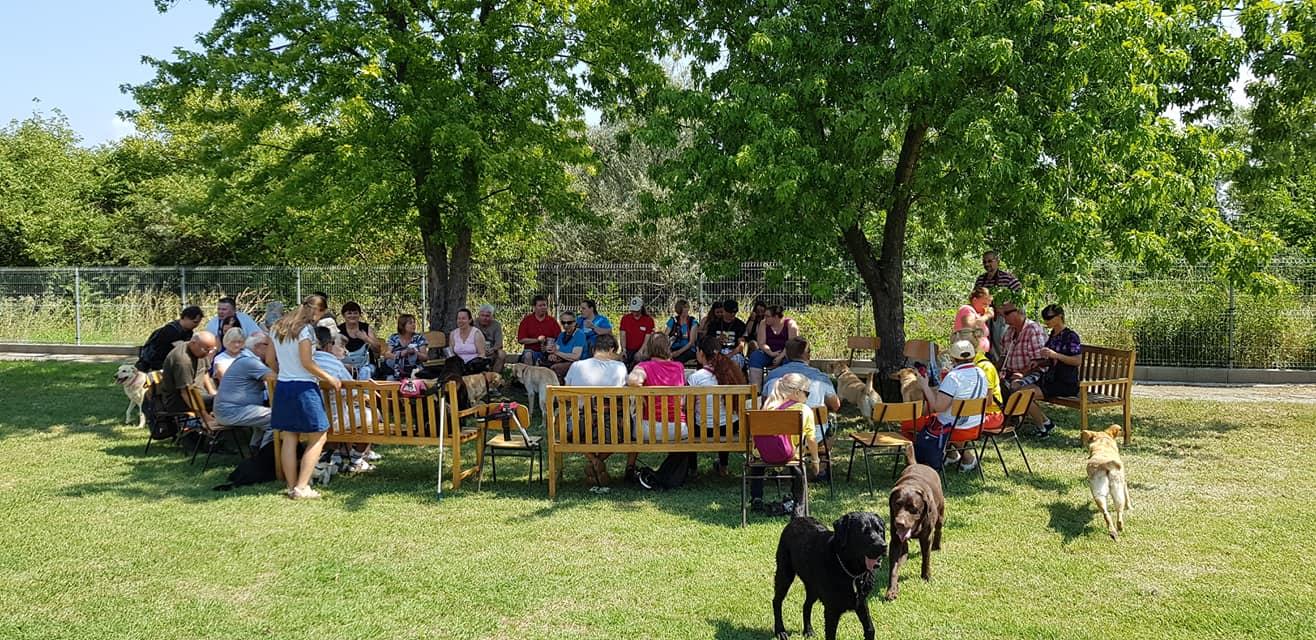 A képen az önfeletten sétáló kutyusok és a háttérben a padokon körbe ülő gazdik láthatóak