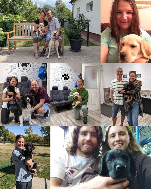 Montázs a hét kiskutyáról és önkéntes nevelőikről.